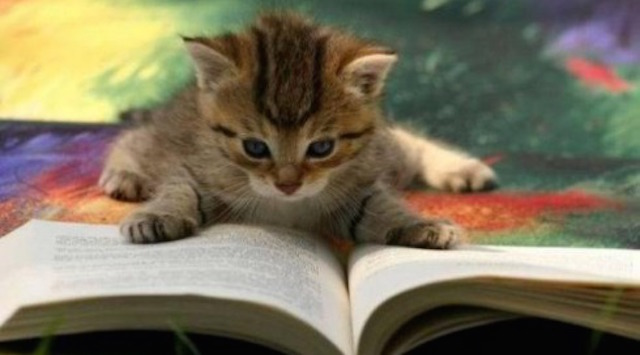 A kitten on top of a book