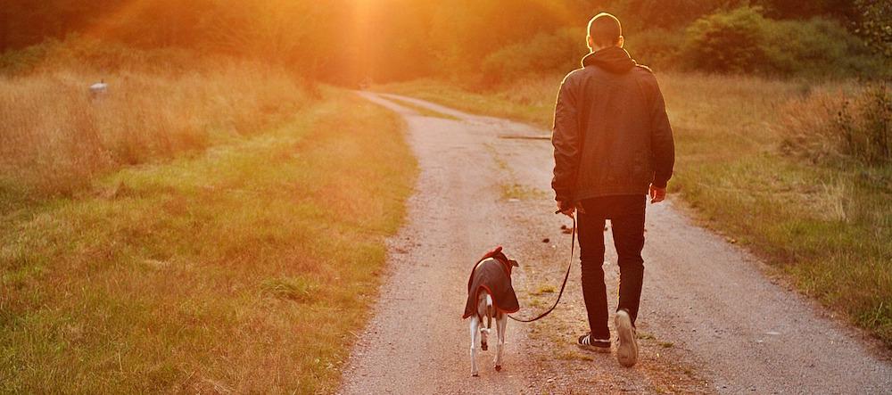Hund und Halter gehen spazieren.